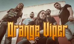 Orange Viper